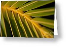 Niu - Cocos Nucifera - Hawaiian Coconut Palm Frond Greeting Card