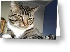 Nixo.12.12.2012.2 Greeting Card