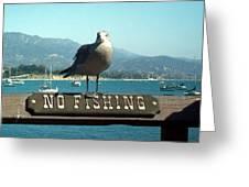 No Fishing Greeting Card