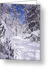 No Footprints Greeting Card by Rob Travis