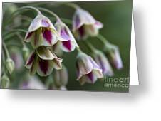 Nodding Bells. Greeting Card