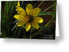 Nodding Bur Marigold Greeting Card
