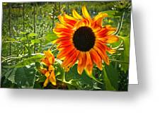Noontime Sunflowers Greeting Card