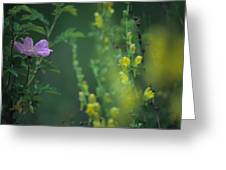 Nootka Rose And Yellow Toadflax Greeting Card