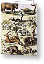North America: Fauna Greeting Card