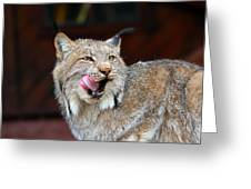 North American Lynx Greeting Card