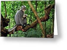 North Sumatran Leaf Monkey Presbytis Greeting Card