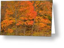 Northeast Fall Colors Greeting Card