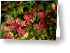 Northern Bilberry Greeting Card