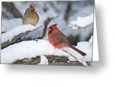 Northern Cardinal Pair 4284 2 Greeting Card