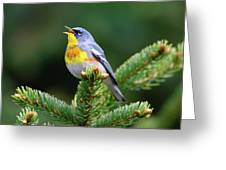 Northern Parula Parula Americana Male Greeting Card