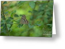 Northern Pearly Eye Butterfly Greeting Card