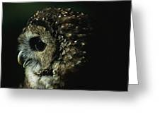 Northern Spotted Owl Strix Occidentalis Greeting Card