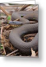 Northern Water Snake  Greeting Card