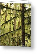 Northwest Mossy Tree Greeting Card
