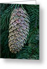 Norway Spruce Cone Greeting Card