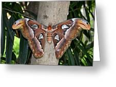 Not A Butterfly But An Atlas Moth Greeting Card