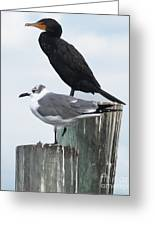 Not Birds Of A Feather Greeting Card