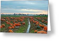 November Pumpkins Greeting Card