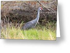 November Sandhill Crane Greeting Card