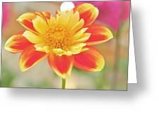 Ntac Solar Flare Greeting Card