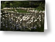 Number Of Flamingoes Inside The Jurong Bird Park In Singapore Greeting Card
