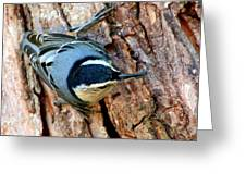 Nuthatch Heading Down Greeting Card