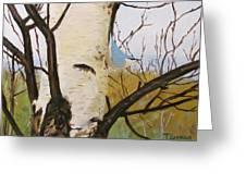 Nuthatch On A Silver Birch 2 Greeting Card