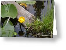 Nymphaea Odorata In Yellow Greeting Card