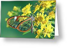 Nymphalid Butterfly Pteronymia Sp Greeting Card