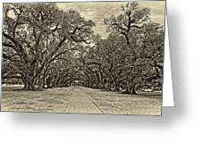 Oak Alley 3 Antique Sepia Greeting Card