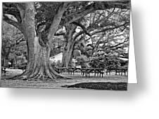 Oak Alley Backyard Monochrome Greeting Card