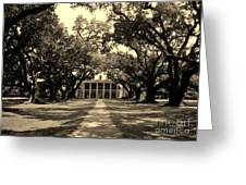 Oak Alley In Black And White Greeting Card