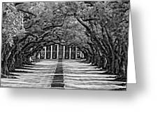 Oak Alley Monochrome Greeting Card by Steve Harrington