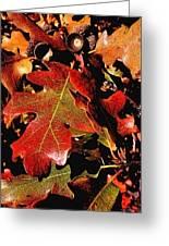 Oak Colors Greeting Card by Darryl Gallegos