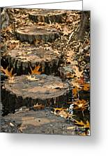 Oak Creek Steps Greeting Card