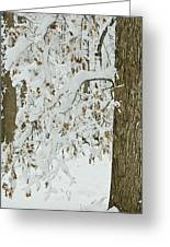 Oak In The Snow Greeting Card