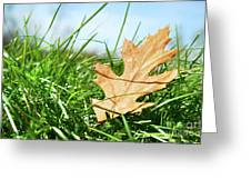 Oak Leaf In The Grass Greeting Card