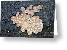 Oak Leaves Greeting Card