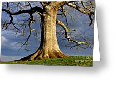 Oak Tree And Storm Clouds Greeting Card