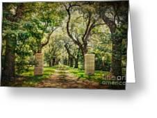 Oak Tree Lined Drive Greeting Card