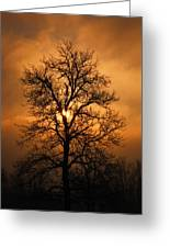 Oak Tree Sunburst Greeting Card