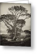 Oak Trees Greeting Card