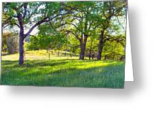 Oak Trees In The Spring Greeting Card
