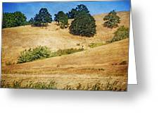 Oaks On Grassy Hill Greeting Card