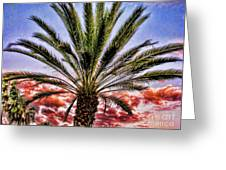 Oasis Palms Greeting Card