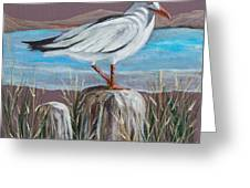 Ocean Sea Gull Greeting Card by Janna Columbus