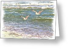 Ocean Seagulls Greeting Card by Cindy Wright