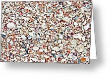 Ocean Shells Greeting Card