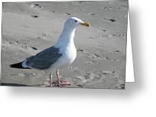 Ocean's Best Friend Greeting Card